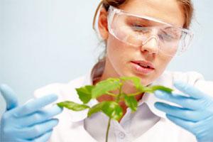 Биолог изучает растение